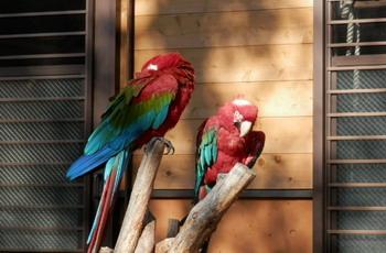 多摩動物園 005