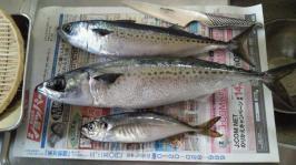 2012Jun魚3匹