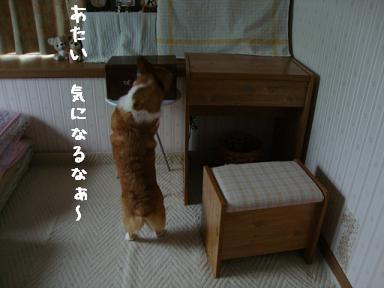 BOXと杏