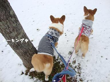 雪道散歩公園2
