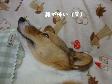 杏の寝相3