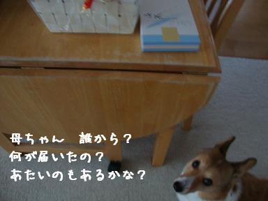 プレゼントと杏