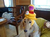 干支帽子Qoo
