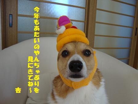 2013挨拶杏