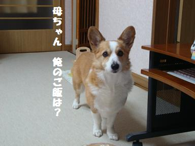 ご飯催促 紋兄