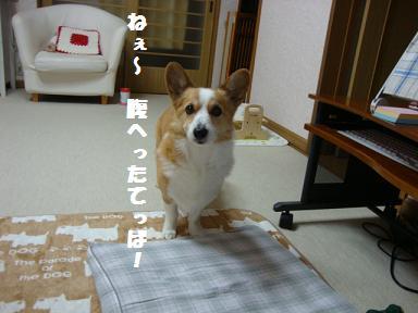 ご飯催促 紋兄2