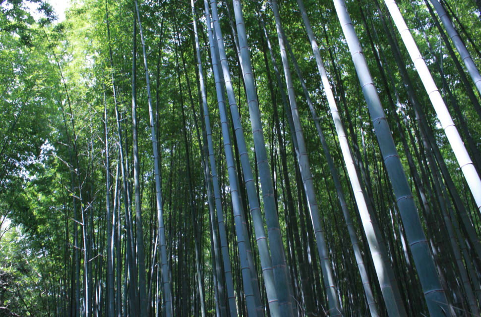 京都写真 編集09
