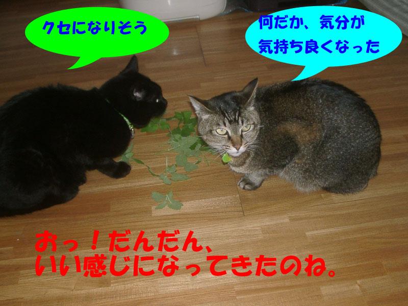 猫ハーブでラリ2
