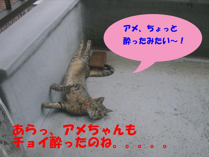 猫ハーブでラリ3