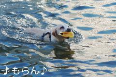 120821泳ぐ-5
