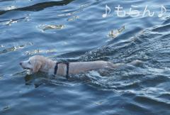 120821泳ぐ-3