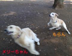 121101代々木公園-2