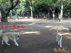 121101代々木公園-3