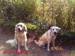 121101再び代々木公園-4