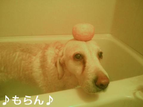121221 柚子湯-1.jpg