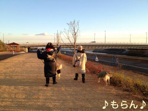 130101 アルフと散歩-1