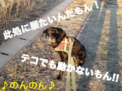 130104 総合公園-4