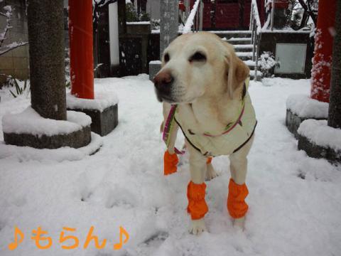 130114 雪やこんこ-1