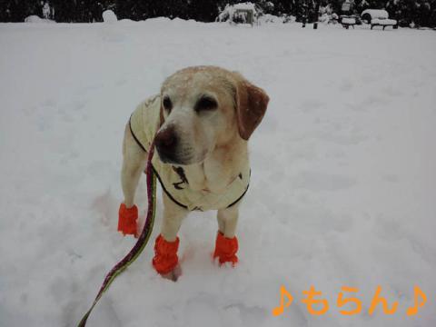130114 雪やこんこ-2