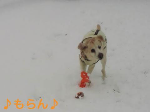 130114 雪やこんこ-5