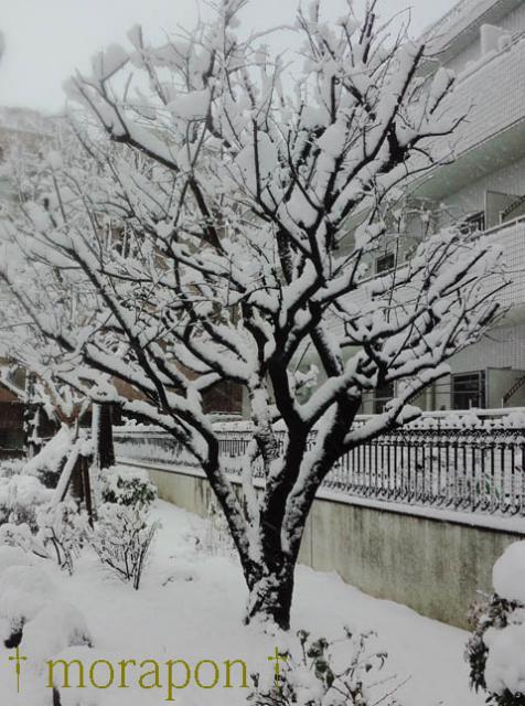 130114雪やこんこ-3