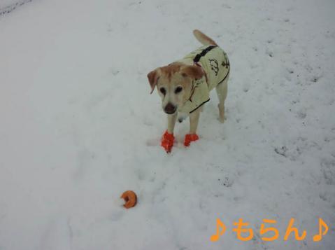 130114 雪やこんこ-6