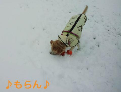 130114 雪やこんこ-7