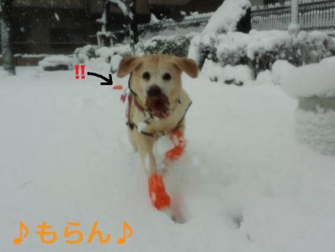 130114 雪やこんこ-4