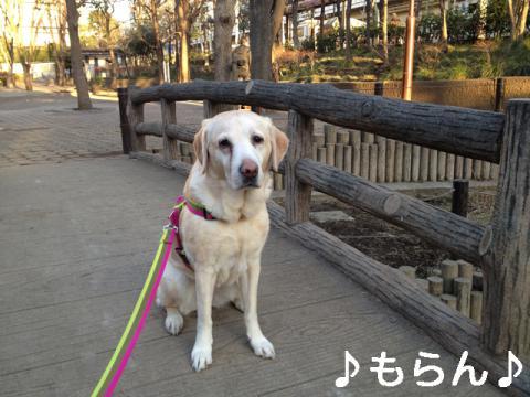 130129 ぽかぽか夕散歩