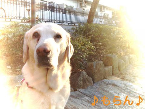 130220 お散歩-2