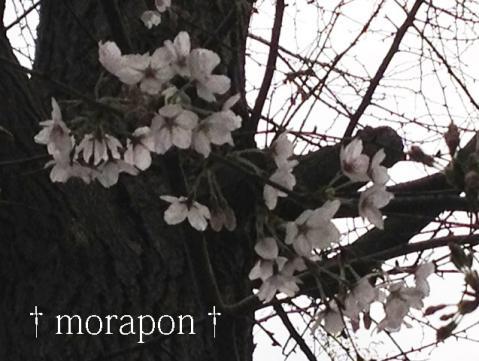 130320 多田神社-2