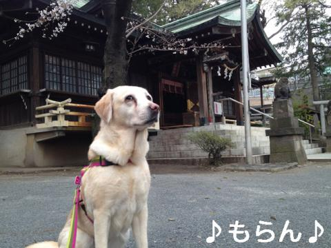 130320 多田神社-4