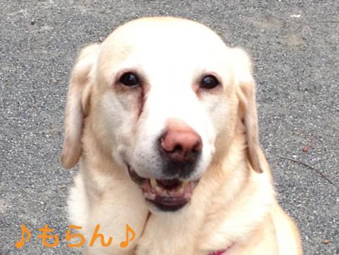 130320 多田神社-5