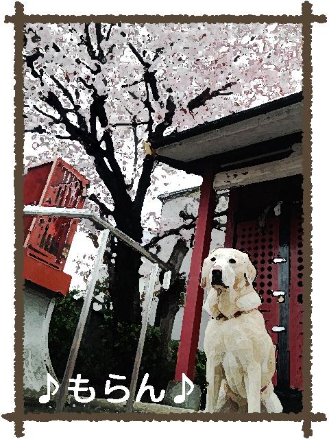 130327 雨上がりの散歩-4