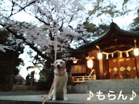 130328 多田神社-1