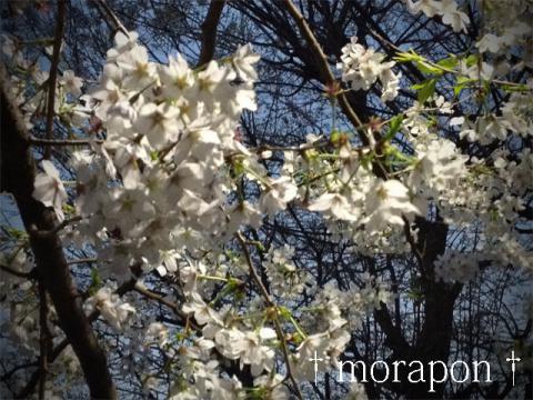 130328 多田神社-2