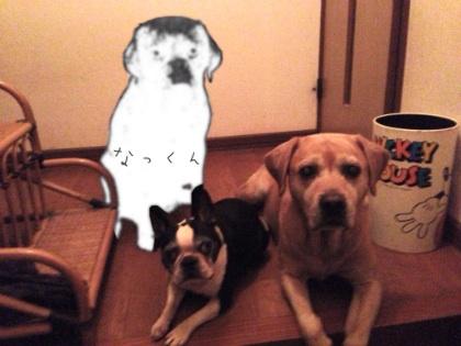 image_20121013112343.jpg