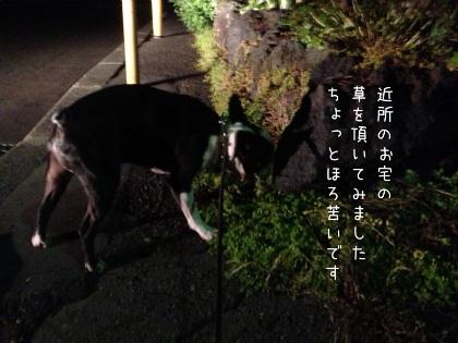 image_20121017190120.jpg