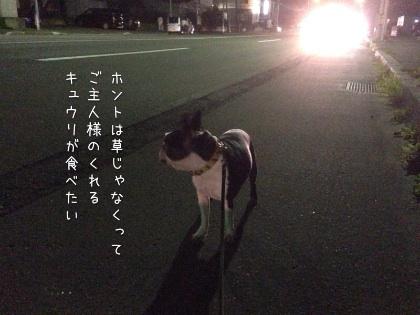 image_20121017191314.jpg