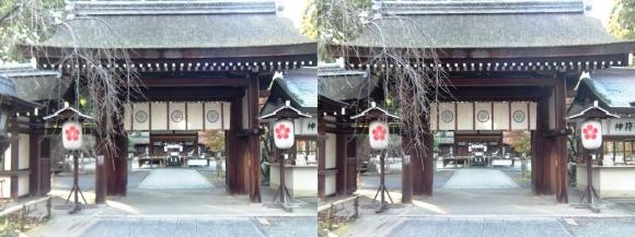 平野神社(交差法)