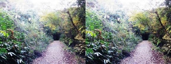 ほしだ園地 おおさか環状自然歩道(平行法)