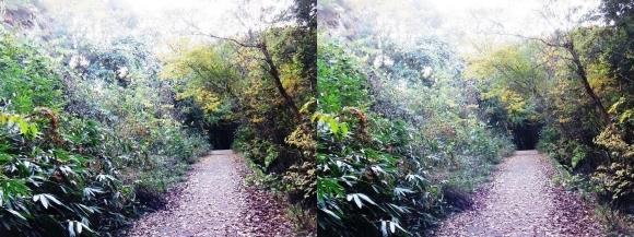 ほしだ園地 おおさか環状自然歩道(交差法)