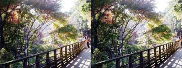 森林鉄道風歩道橋②(平行法)