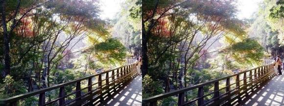 森林鉄道風歩道橋②(交差法)