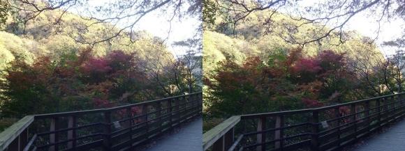 森林鉄道風歩道橋①(平行法)