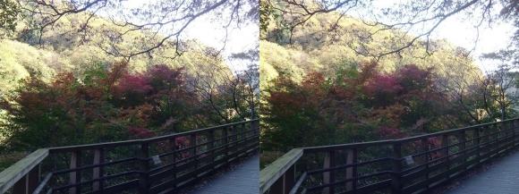 森林鉄道風歩道橋①(交差法)