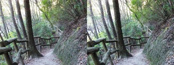 ほしだ園地コース①(平行法)