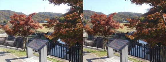 天野川 水辺プラザ(交差法)