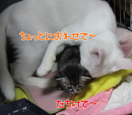 IMG_0538.jpg
