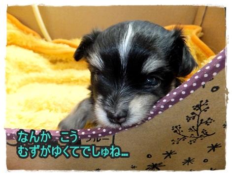 DSCF7142_20121013130703.jpg